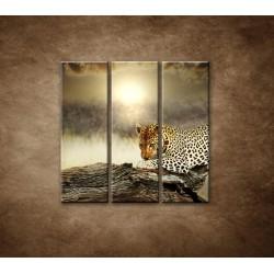 Obrazy na stenu - Odpočívajúci leopard - 3dielny 90x90cm