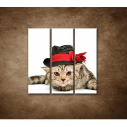 Obrazy na stenu - Mačiatko v čiernom klobúku - 3dielny 90x90cm