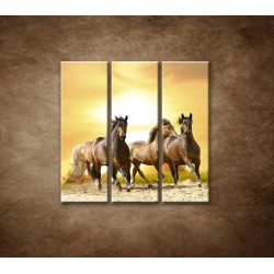 Obrazy na stenu - Divoké kone - 3dielny 90x90cm