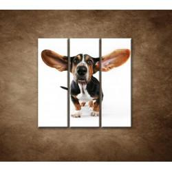 Obrazy na stenu - Ušatý pes - 3dielny 90x90cm