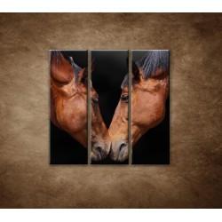 Obrazy na stenu - Kone - 3dielny 90x90cm