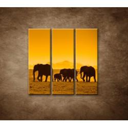 Obrazy na stenu - Slonia rodinka - 3dielny 90x90cm
