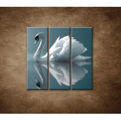 Obrazy na stenu - Labuť - 3dielny 90x90cm