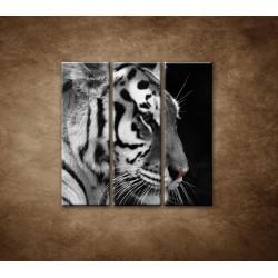 Obrazy na stenu - Tiger - detail - 3dielny 90x90cm