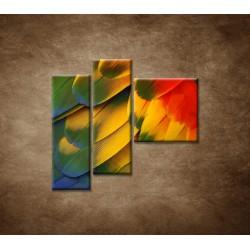 Obrazy na stenu - Farebné perie - 3dielny 110x90cm