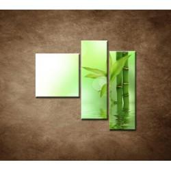 Obrazy na stenu - Bambusový výhonok - 3dielny 110x90cm