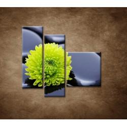 Obrazy na stenu - Žlto-zelený kvet - 3dielny 110x90cm