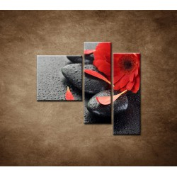 Obrazy na stenu - Červená gerbera a kamene - 3dielny 110x90cm