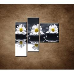 Obrazy na stenu - Tri sedmokrásky - 3dielny 110x90cm