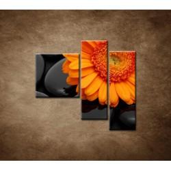 Obrazy na stenu - Oranžová gerbera na kameňoch - 3dielny 110x90cm