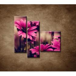 Obrazy na stenu - Ružové gerbery - 3dielny 110x90cm