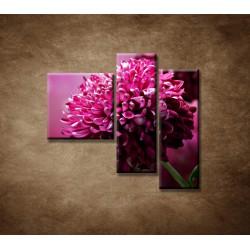 Obrazy na stenu - Kvetinové pozadie - 3dielny 110x90cm