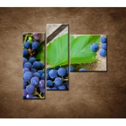 Obrazy na stenu - Modré hrozno - 3dielny 110x90cm