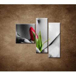 Obrazy na stenu - Mokré dievča s tulipánom - 3dielny 110x90cm