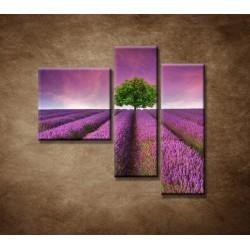 Obrazy na stenu - Levanduľové pole - 3dielny 110x90cm