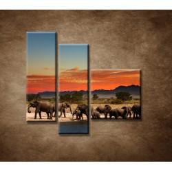 Obrazy na stenu - Safari - 3dielny 110x90cm