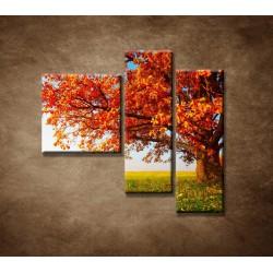 Obrazy na stenu - Jesenný dub - 3dielny 110x90cm