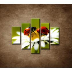 Obrazy na stenu - Lienky na kvete - 5dielny 100x80cm
