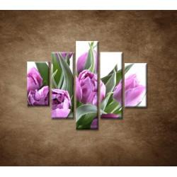 Obrazy na stenu - Nežné tulipány - 5dielny 100x80cm
