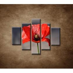 Obrazy na stenu - Vlčí mak - 5dielny 100x80cm
