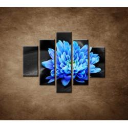 Obrazy na stenu - Modrý kvet na kameňoch - 5dielny 100x80cm