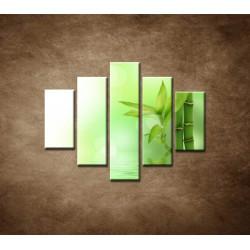 Obrazy na stenu - Bambusový výhonok - 5dielny 100x80cm