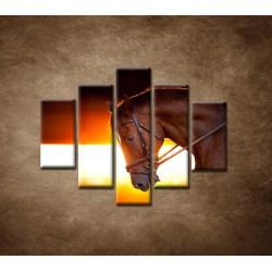 Obrazy na stenu - Kôň v stajni - 5dielny 100x80cm