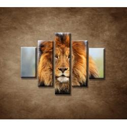 Obrazy na stenu - Leví kráľ - 5dielny 100x80cm