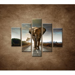 Obrazy na stenu - Slon - 5dielny 100x80cm