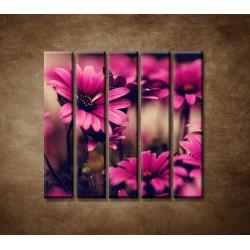 Obrazy na stenu - Ružové gerbery - 5dielny 100x100cm