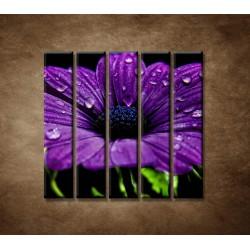 Obrazy na stenu - Fialový kvet - 5dielny 100x100cm