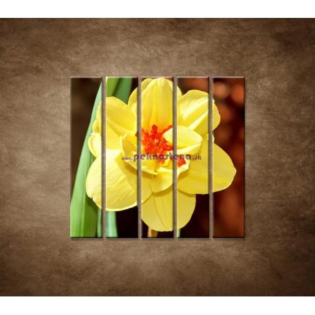 Obrazy na stenu - Narcis - detail - 5dielny 100x100cm