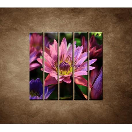 Obrazy na stenu - Lotosové kvety - 5dielny 100x100cm