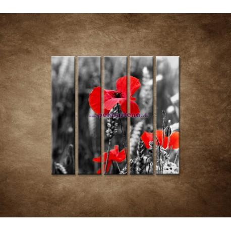 Obrazy na stenu - Červené vlčie maky - 5dielny 100x100cm