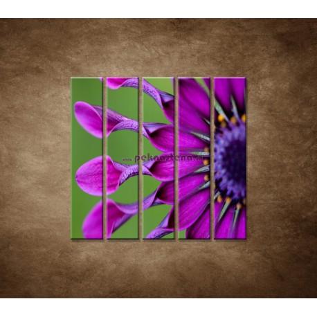 Obrazy na stenu - Tropický kvet - 5dielny 100x100cm