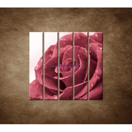 Obrazy na stenu - Ruža s rosou - 5dielny 100x100cm