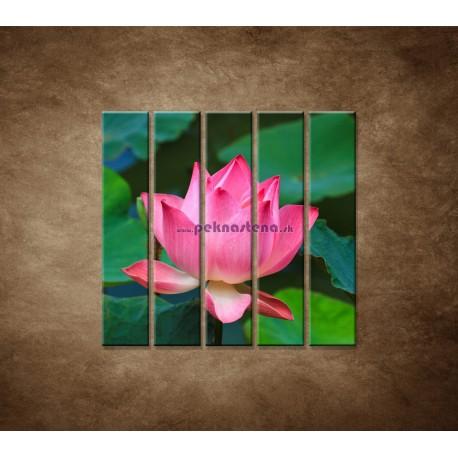 Obrazy na stenu - Lekno 2 - 5dielny 100x100cm