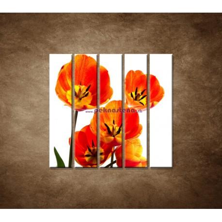 Obrazy na stenu - Oranžové tulipány - 5dielny 100x100cm