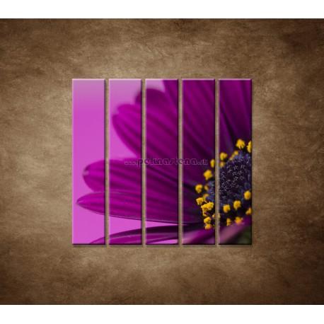 Obrazy na stenu - Fialová gerbera - 5dielny 100x100cm