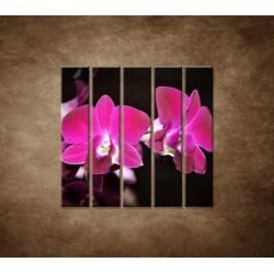 Ružová orchidea na čiernom pozadí - 5dielny 100x100cm