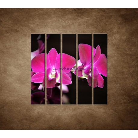Obrazy na stenu - Ružová orchidea na čiernom pozadí - 5dielny 100x100cm