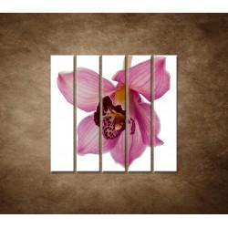Orchidea - detail - 5dielny 100x100cm