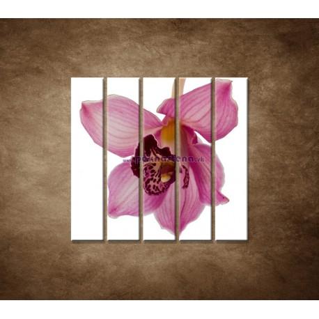 Obrazy na stenu - Orchidea - detail - 5dielny 100x100cm