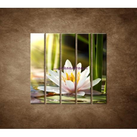 Obrazy na stenu - Lekno - 5dielny 100x100cm