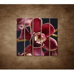 Bordová orchidea - 5dielny 100x100cm