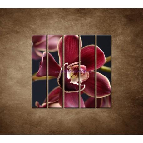 Obrazy na stenu - Bordová orchidea - 5dielny 100x100cm