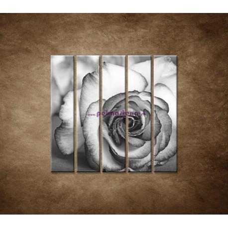 Obrazy na stenu - Ruža - 5dielny 100x100cm