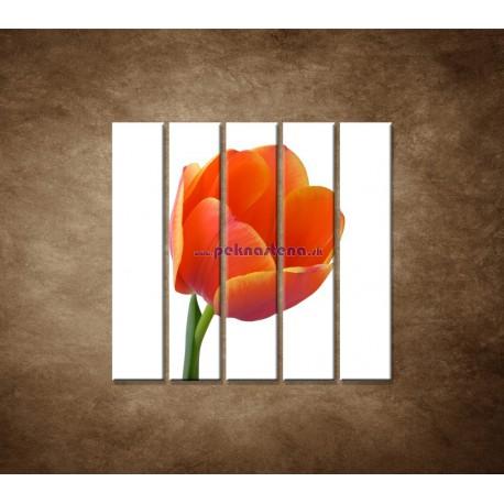 Obrazy na stenu - Tulipán - detail -  5dielny 100x100cm