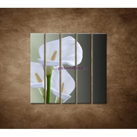 Obrazy na stenu - Tri biele kaly - 5dielny 100x100cm