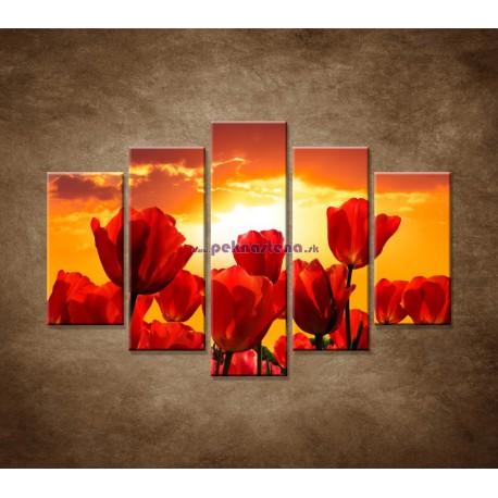 Obrazy na stenu - Západ slnka nad tulipánmi - 5dielny 150x100cm